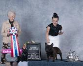 BISS BPIS CH Miradon The Gospel Singer, winning Best In Specialty at the French Bulldog Club of Western Canada, under honarable judge Mrs. Paula Hartinger. Beautifully presented by Anastasia Chitova